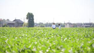 上田英俊の農業体験2
